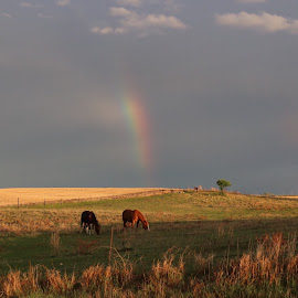 End of the Rainbow  by Laura Gardner - Novices Only Landscapes ( clouds, nature, horses, nd, rainbows, weather, storm, prairie, spring )