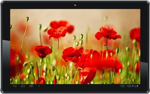 Poppy Fields HD LWP - screenshot