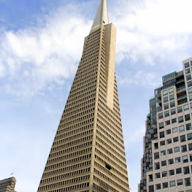 TRANSAMERICA BUILDING by Jody Frankel - Buildings & Architecture Office Buildings & Hotels