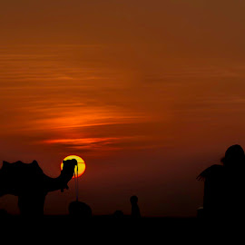 silhouettes  by Mohit Rajpurohit - Landscapes Deserts ( clouds, #silhouttes, #desert, lady, #sunset )