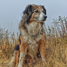 Sage on a Foggy Morning by Twin Wranglers Baker - Animals - Dogs Portraits (  )