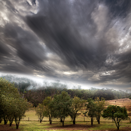 Fog by Greg Tennant - Landscapes Cloud Formations ( rural, clouds, trees, fog )