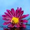 aIMG_8809_cr.JPG