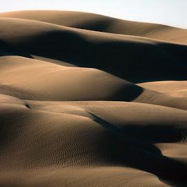 Sand Dunes by Visakha Marla - Landscapes Deserts ( sand, dunes, tan )