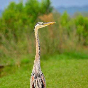 20150425_GainesvilleFL_Hiking_PaynesPrairie_LaChuaTrail_EditedJPEG (2).jpg