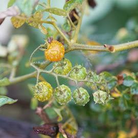 by Leonard Schummer - Nature Up Close Gardens & Produce