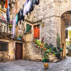 Dalmatia story.. by Mario Španjić - City,  Street & Park  Historic Districts ( cat, trogir, croatia, dalmatia )