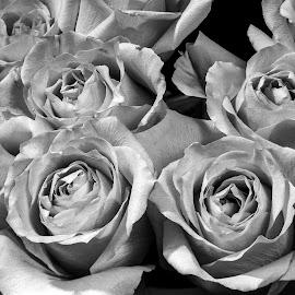 by Thomas Lane - Black & White Flowers & Plants