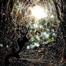 by Terry Herndon - Nature Up Close Webs