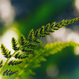 Leaves in the morning by Dipin Dev P - Nature Up Close Leaves & Grasses ( plant, natural light, nature, green, green leaves, greenery, plants, nature up close, leafy, leaf, sunlight, morning, leaves )