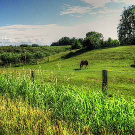 2 horses by Fraya Replinger - Animals Horses ( fence, hills, horses, horse, green grass )