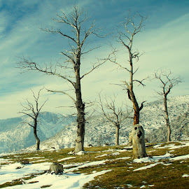 old by Costin Mugurel - Nature Up Close Trees & Bushes ( winter, mountain, nature, snow, trees )