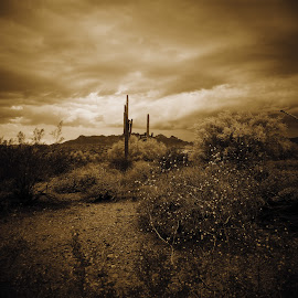 Dusk! by Misty Mcnaughton - Landscapes Deserts ( mountains, brown, landscape, dusk, cactus )