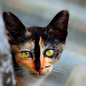 by Martin Marthadinata - Animals - Cats Portraits