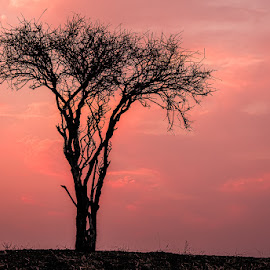 Sunset in Botswana by Eugene Dopheide - Landscapes Sunsets & Sunrises ( sunset, thorn tree, silhoette, africa )