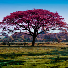 Horse Tree by Nanto 사파이어 - Nature Up Close Trees & Bushes ( false color, tree, color, horse, false )