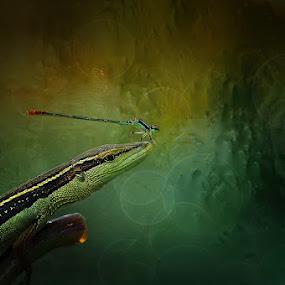 by Yulian Amin - Animals Reptiles