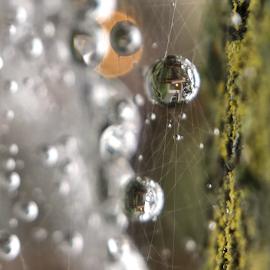 Spiderwebs and raindrops by Miguel Salgado - Instagram & Mobile Instagram ( drop, macro, rain, reflection, spiderwebs, web, sphere, water, spider )