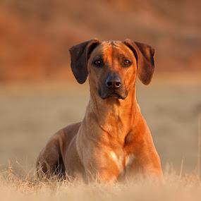 - Kyra - by Lukáš Lang - Animals - Dogs Portraits ( #GARYFONGPETS, #SHOWUSYOURPETS,  )