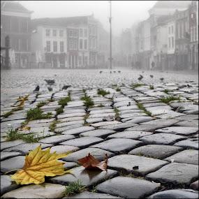 Grey day by Bram de Mooij - City,  Street & Park  Neighborhoods ( market, fall, grey, gouda )
