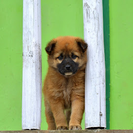 by Bhaskar Patra - Animals - Dogs Puppies