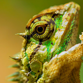 by Charliemagne Unggay - Animals Reptiles