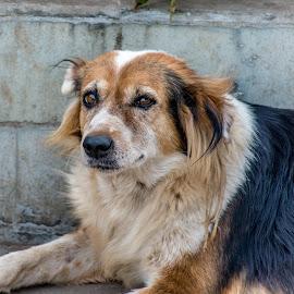 Dog #1 Shot #2  by Hariharan Venkatakrishnan - Animals - Dogs Portraits