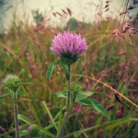 Fuschia Fusion by Jennifer Ellis - Instagram & Mobile iPhone ( nature, purple, petals, grass, green, outdoors, pink, flowers, garden, flower )