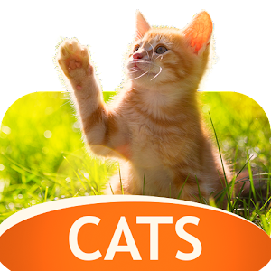 Download Wallpapers with cats For PC Windows and Mac