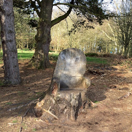 A resting place. by Peter Wright - Landscapes Forests ( carved seat, making use of an old tree, and a picnic, ideal for a rest, in the middle of a wooded area )