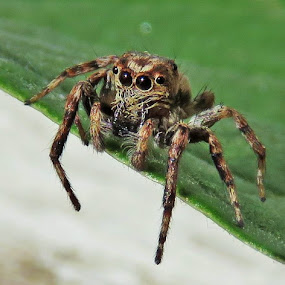 by Geraldine Angove - Animals Insects & Spiders
