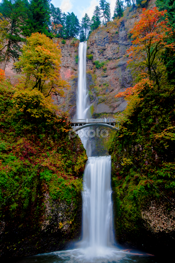 Multnomah Dressed in Autumn by Penny Miller - Landscapes Waterscapes ( water, oregon, portland, waterfalls, well known, national, waterfall, beautiful, multnomah, pretty, historic, multnomah falls, popular, river,  )