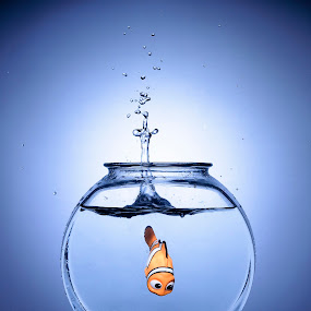 Back To Safety by Jim O'Neill - Artistic Objects Other Objects ( water, flash, backlit, speelights, splash, gavin hoey, fish, backlighting, composite )