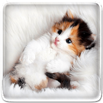 Cat Live Wallpaper Icon