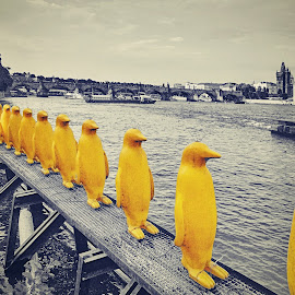 Yellow Penguins from Prague by Jiri Cetkovsky - City,  Street & Park  Skylines ( statue, vltava, penguin, yellow, prague )