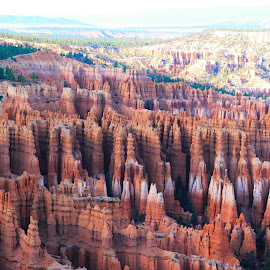 Bryce Canyon!! by Meenakshi Yadav - Landscapes Travel ( utah, formations, travel, rocks, bryce canyon )