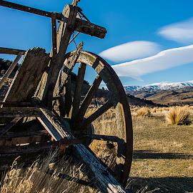 Forgotten Cart by Bren Dyer - Transportation Other ( broken, gold., dray, otago, blue, cart, abandoned )