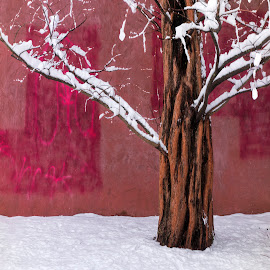 Pink Wall with Snow by David Stone - City,  Street & Park  City Parks ( tree, graffiti, snow, bare tree, pink, wall,  )