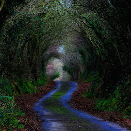 climsland lane by H Osborne - Transportation Roads