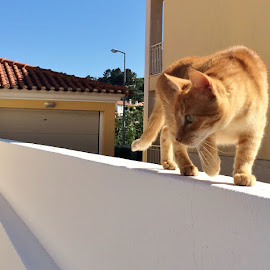 Old cat looking for rats, by Carlos Narciso - Animals - Cats Playing ( cat, old cat, roof cat, yellow cat, cat hunter )
