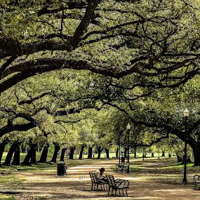 Springtime by Prentiss Findlay - City,  Street & Park  City Parks ( park, trees in park, houston park, park in spring, city park )