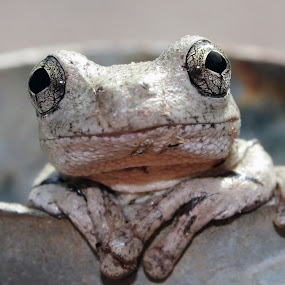 Keeping Cool by Mandy Harvey - Animals Amphibians