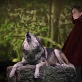 Grandma by BethSheba Ashe - Digital Art Animals ( red cloak, red riding hood, woman, fantasy, wolf, woodland, howling, trees )