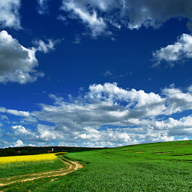 Untitled by Zsolt Zsigmond - Landscapes Prairies, Meadows & Fields ( field, hill, sky, canola, yellow, road )