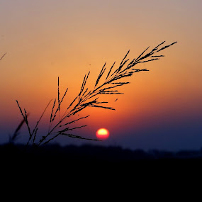 Sunset by Subrata Sarkar - Landscapes Sunsets & Sunrises ( sunset, landscapes )