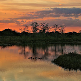 by Nancy Bettencourt - Landscapes Waterscapes