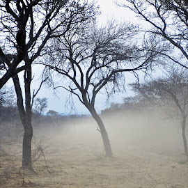 Bushdrive by JP Beukes - Landscapes Travel ( bushdrive, safari road, back of landcruiser, dust on a road, safari drive )