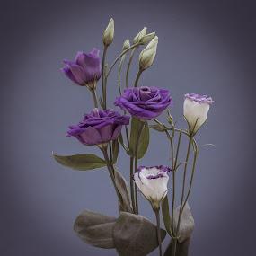 by Dave Hudson - Flowers Flower Arangements (  )