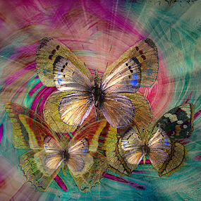 BUTTERFLY'S JOURNEY   by Carmen Velcic - Digital Art Abstract ( abstract, butterfly, purple, blue, colors, digital )