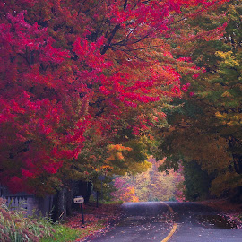 by Christian Roger Costanzo - Landscapes Forests ( quebec, canada, red leaves, fall, road, leaves )